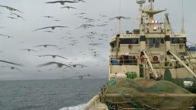 Seagulls soar behind a board of the fishing trawler. stock video