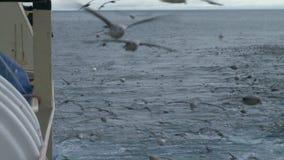 Seagulls soar behind a board of the fishing trawler. stock footage