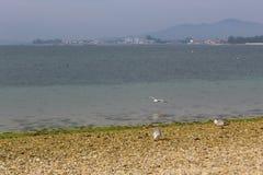 Seagulls som äter i stranden fotografering för bildbyråer