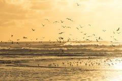 Seagulls som av tar en strand under solnedgång Royaltyfri Fotografi