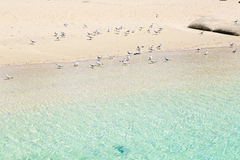 Seagulls som blir på sanden Arkivfoton