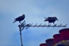 Seagulls som flockas i, parkerar arkivfoto