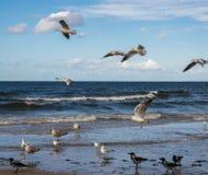 Seagulls som flyger över det blåa havet och står i grunt vatten royaltyfri fotografi