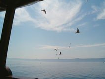 Seagulls som flyger över ett hav Arkivfoton