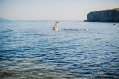 Seagulls som flyger över havet Royaltyfri Fotografi