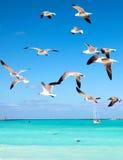 Seagulls som flyger i himlen Arkivfoto