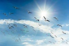 Seagulls som flyger i skyen royaltyfri bild