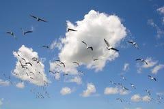 Seagulls som flyger i skyen arkivfoto