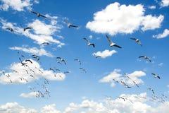 Seagulls som flyger i skyen arkivbild