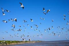 Seagulls som flyger i skyen royaltyfri foto