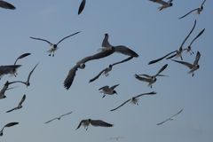 Seagulls som flyger på stranden royaltyfri foto