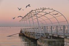 Seagulls som framme flyger av havet, solnedgång arkivfoton