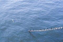 Seagulls som i rad står Arkivfoto