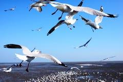 Seagulls som nära flyger i blå himmel vid stranden Royaltyfria Foton