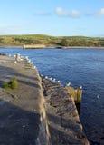Seagulls som sätta sig på den Aberdeen hamnen, Skottland Fotografering för Bildbyråer