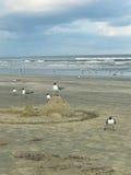 Seagulls som sätta sig på en sandhaj Arkivbild