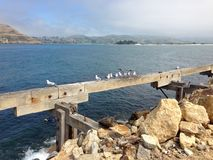 Seagulls som sätta sig på haveriet royaltyfria foton