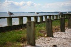 Seagulls som ser över den Manukau hamnen i sommar Arkivfoton