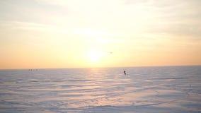 Seagulls som sitter på det fryste is-täckte havet Fiskmåsfluga över vinterhavet Stort vitt seagullflyg ovanför stock video