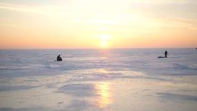 Seagulls som sitter på det fryste is-täckte havet Fiskmåsfluga över vinterhavet Stort vitt seagullflyg ovanför lager videofilmer