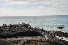 Seagulls som står i, vaggar att förbise havet fotografering för bildbyråer