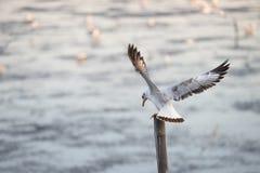 Seagulls som står på bambu Arkivfoton