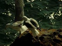 Seagulls som tar av Fotografering för Bildbyråer