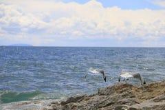 Seagulls som tar av Royaltyfri Bild