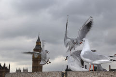 Seagulls on South Bank London Royalty Free Stock Photo