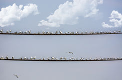 Seagulls stać Obrazy Royalty Free