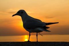Seagulls stand on a bridge at sunset Stock Photo
