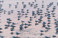 Seagulls. Stand with shadow reflex on the coast stock photography