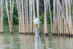 Seagulls standing on bamboo shore of the Sea Stock Image