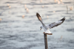 Seagulls standing on bamboo stock photos