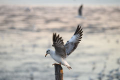Seagulls standing on bamboo royalty free stock photo