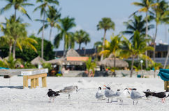 Seagulls standing on the beach Royalty Free Stock Photography