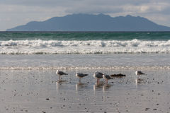 Seagulls standing on beach Royalty Free Stock Images