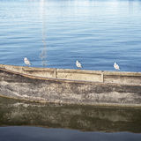 Seagulls standing on the boat Royalty Free Stock Image