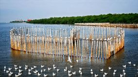 Seagulls Standing on Heart Shape Bamboo Sticks Stock Image