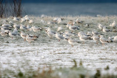 Seagulls standing on shore Royalty Free Stock Photos