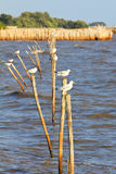 Seagulls standing on a wooden post Stock Photo