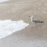 A seagulls stay on sand Royalty Free Stock Photography