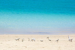 Seagulls staying on the sand Stock Images