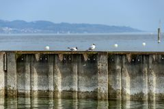 Seagulls are stitting on a steel wall stock photography