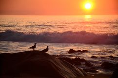 Seagulls on the stones at the shore of the ocean at the sunset. royalty free stock photos