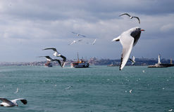 Seagulls in the stormy sea Stock Images