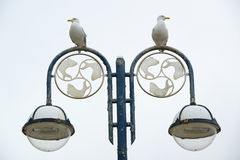 Seagulls on a street lantern Stock Photo
