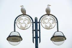 Seagulls on a street lantern Stock Photo