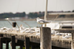 Seagulls in the sun Royalty Free Stock Images