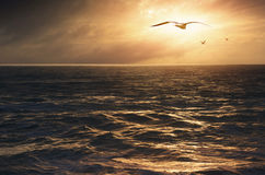 Seagulls into the Sun Stock Photography